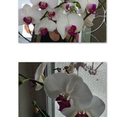 Happiness Post #63: Orchids
